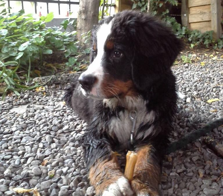 "Hunde Foto: Bobby und Viva – Ein richtiger Hund""-"""