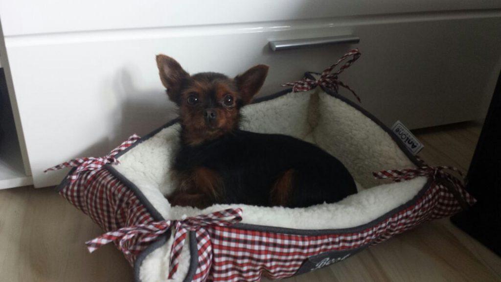 Hunde Foto: Manuela und Ayla - Mein kleines Prinzesschen Ayla