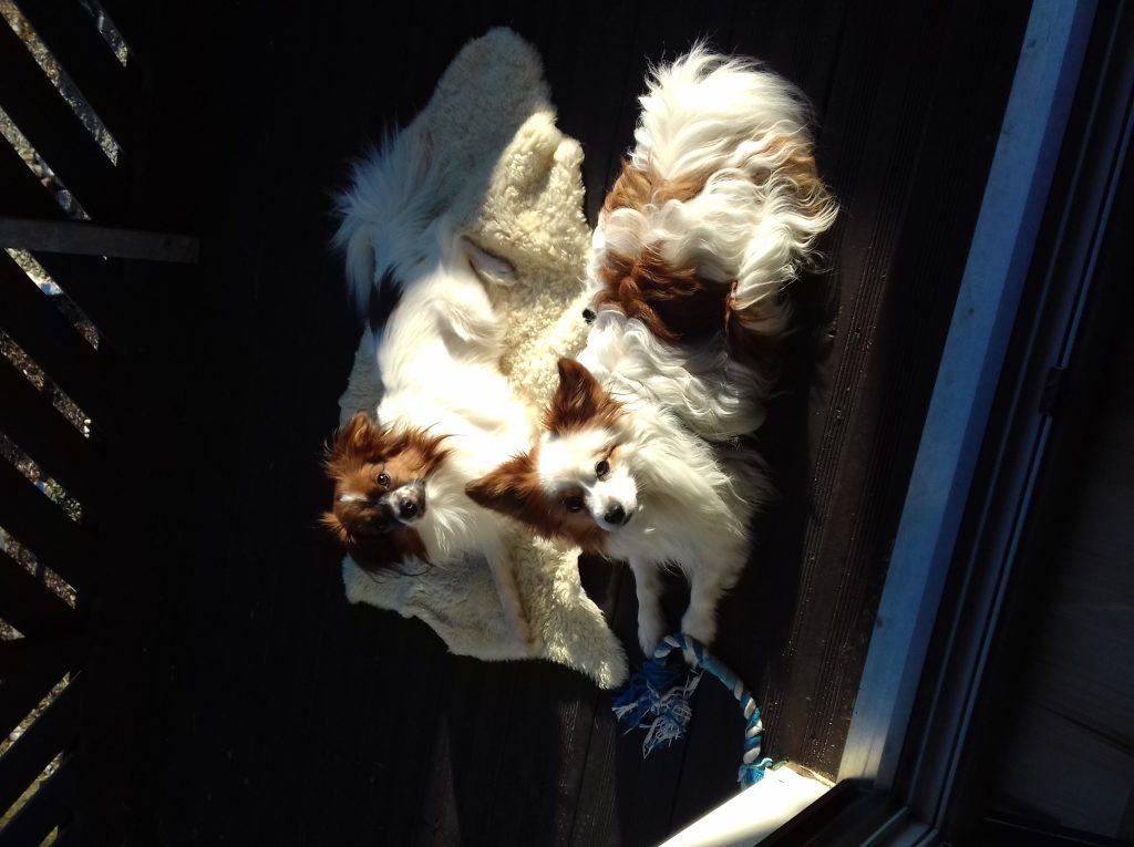Hunde Foto: Lissy und Teddy und Arthur - Meine papis