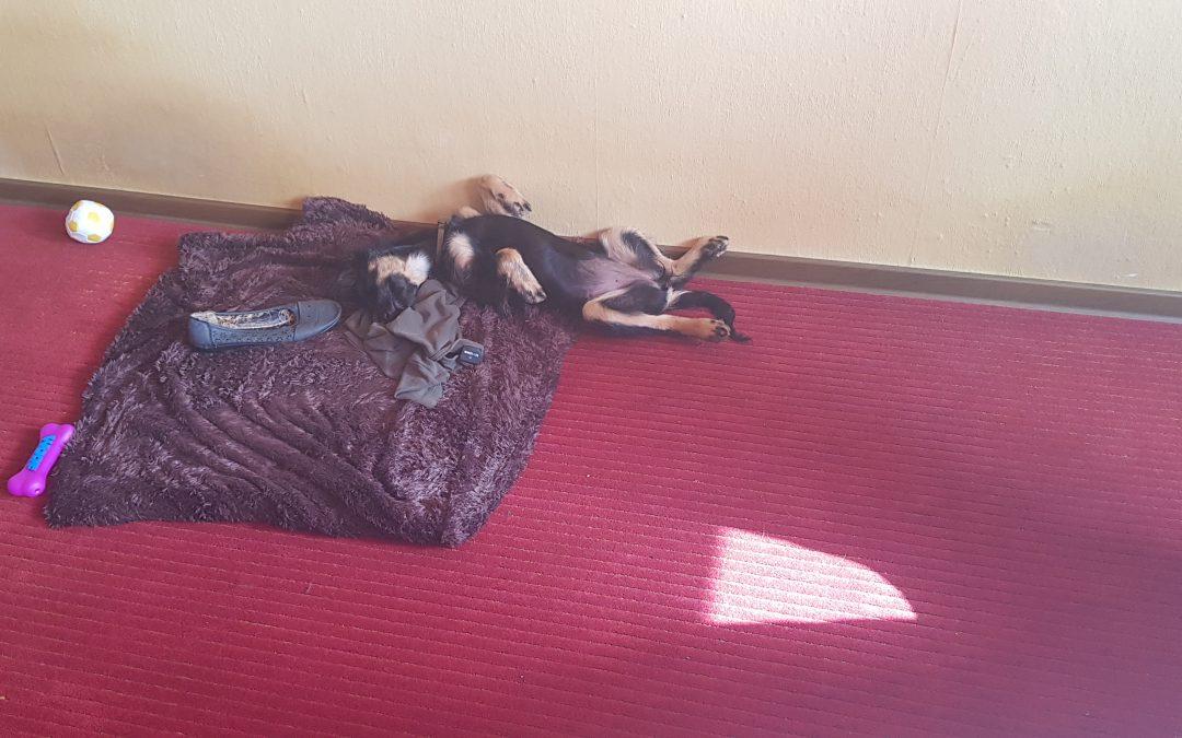 Hunde Foto: Norbert und Roxy – Die Welt is ja so anstrengend