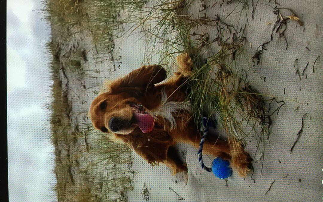 Hunde Foto: Simone und Patschi – Mein Ball, mein Strand… perfekter Tag