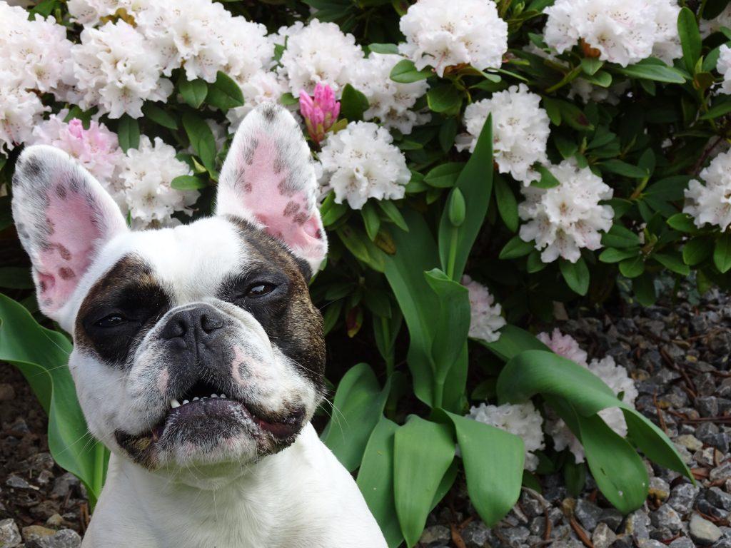 Hunde Foto: Susanne und Eddie - Tarnung ist alles