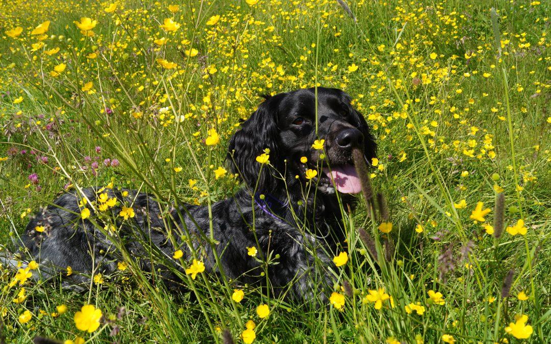 Hunde Foto: Sylvia und Ronja – Seelenhund Ronja