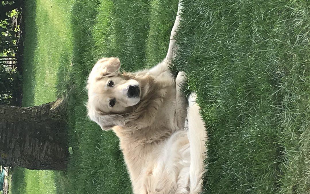 Hunde Foto: Stefanie und Toni – Toni und Stefanie