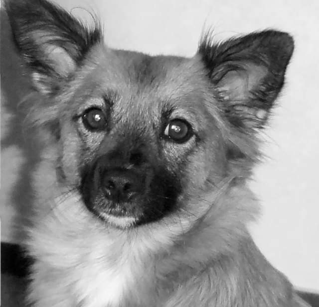 Hunde Foto: Ralf und Luna – Portrait