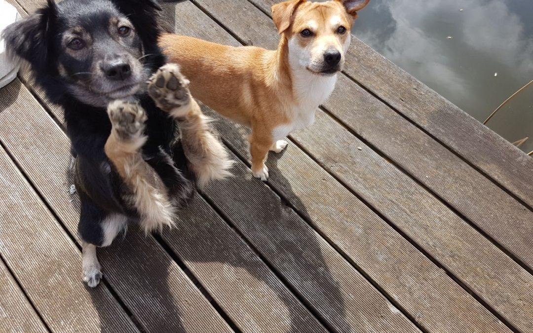 Hunde Foto: Marlina und Fips und Bailey – Chaoten
