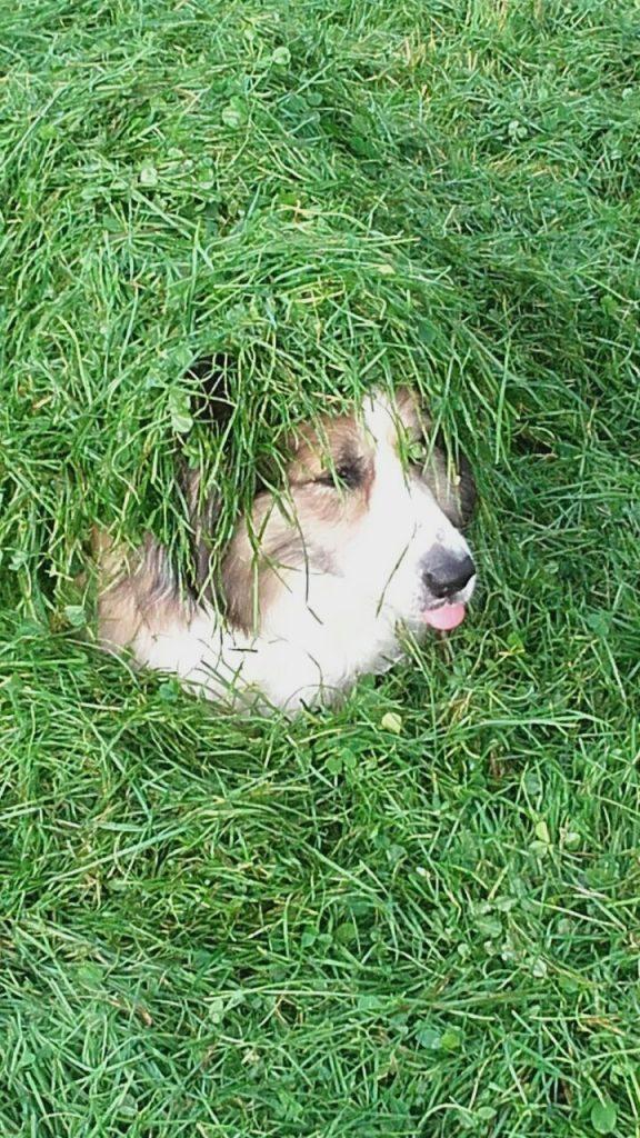 Hunde Foto: Helene und Sandy - Sandy unser Sonnenschein