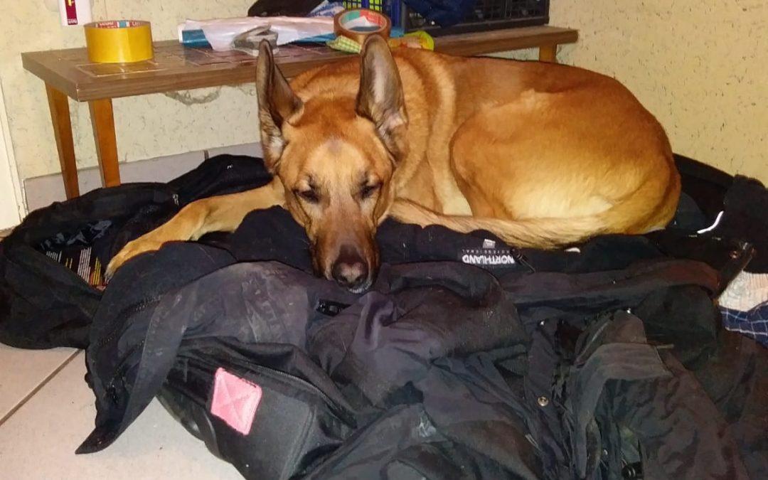 Hunde Foto: Michael und Daemon – Wenn Herrchen auf Montage muss!