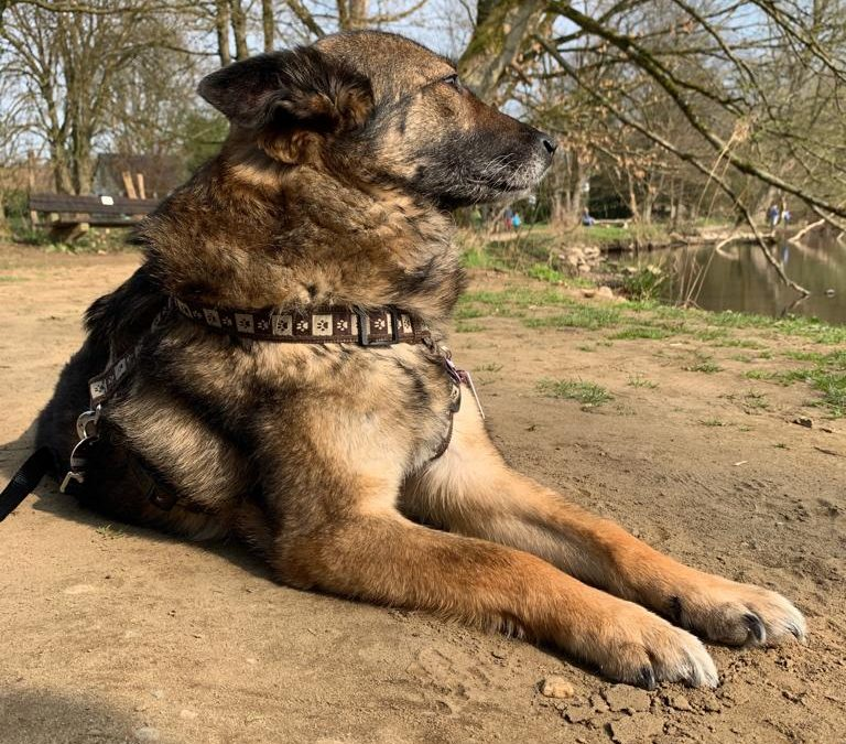Hunde Foto: Tanja und Tiffany – Unsere Prinzessin ♥️