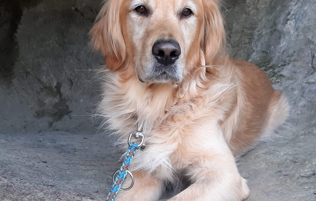 Hunde Foto: Claudia und Yukon – Yukon der Höhlenbär