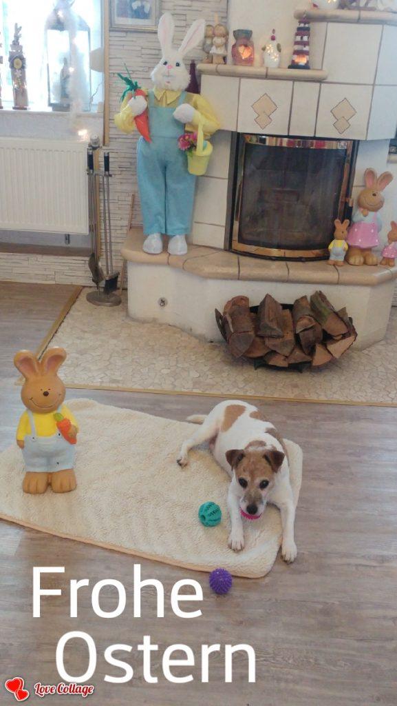 Hunde Foto: Marilena und Nicki - Ostern feiern  🍧
