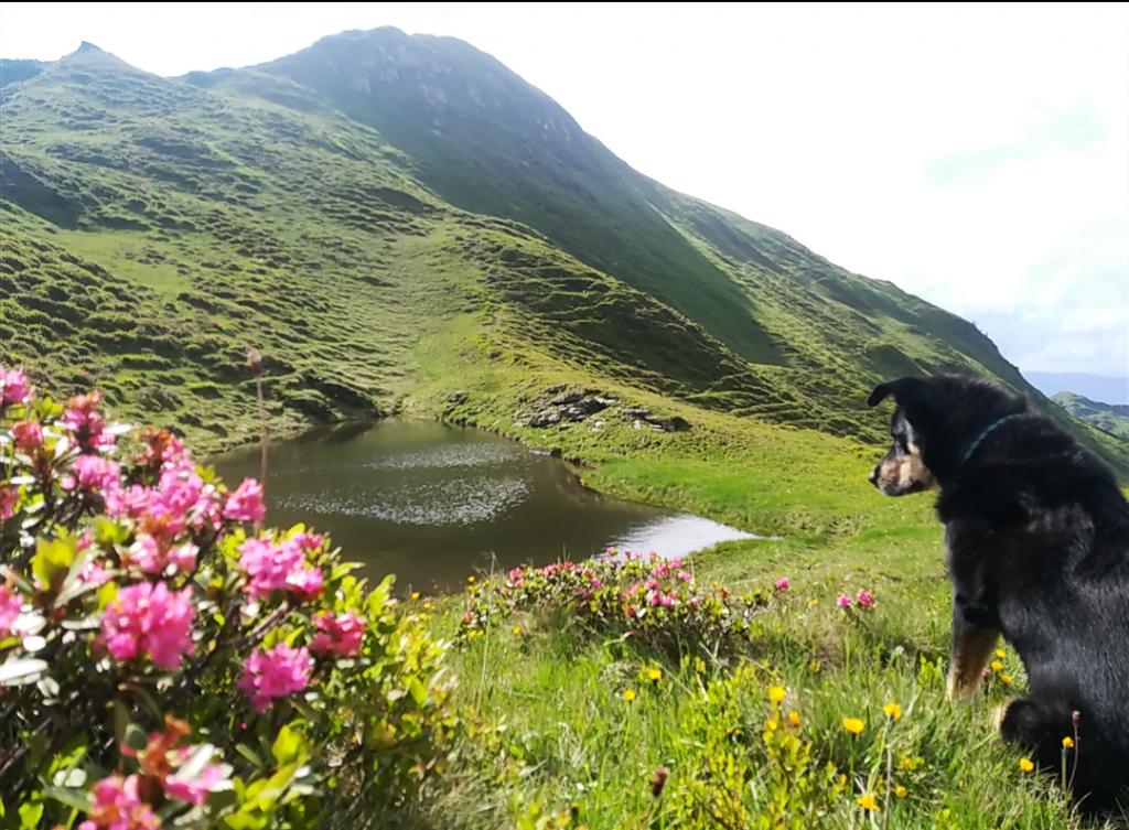 Hunde Foto: Zoe und Sam - Purer Genuss