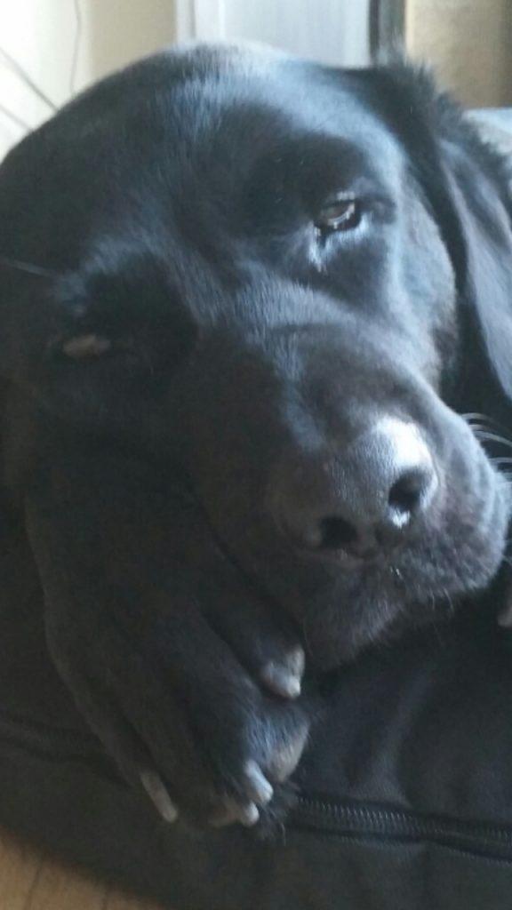 Hunde Foto: Ramona und Scott - Unser Böbi.. 😍😍