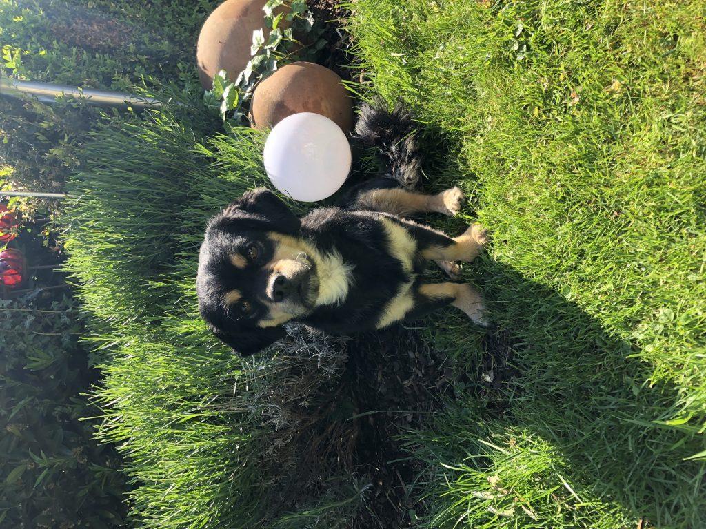 Hunde Foto: Karla und Theo - Auch Theo genießt die Sonne ☀️