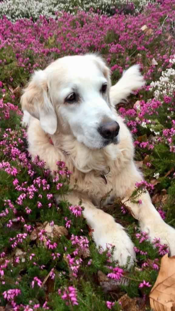 Hunde Foto: Gaby und Luna - Blumenmädchen
