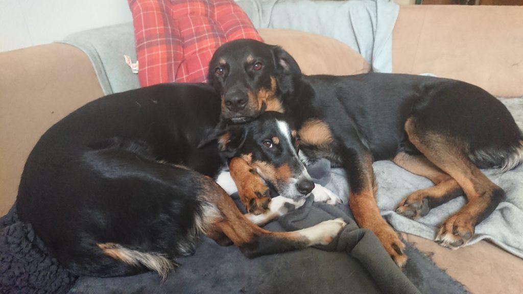 Hunde Foto: Stephanie und Mila und ace - Mama und Sohn, ohne meine Babys geht nicht♥️