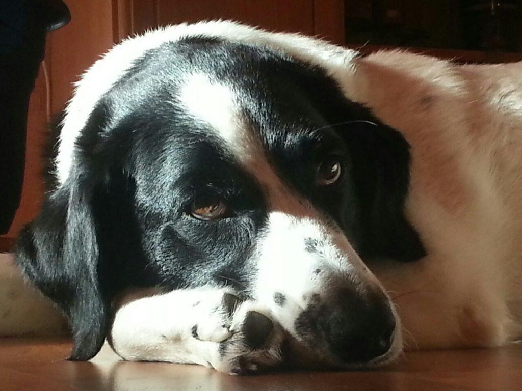 Hunde Foto: Ralf und AFRA - Geburtstagshündin