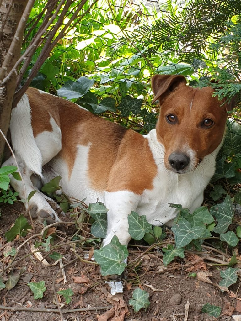 Hunde Foto: Wally und Pino - Mister lover