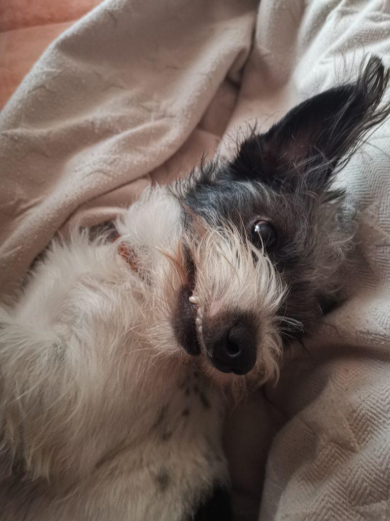 Hunde Foto: Petra und Bobby - Petra und Bobby❤️