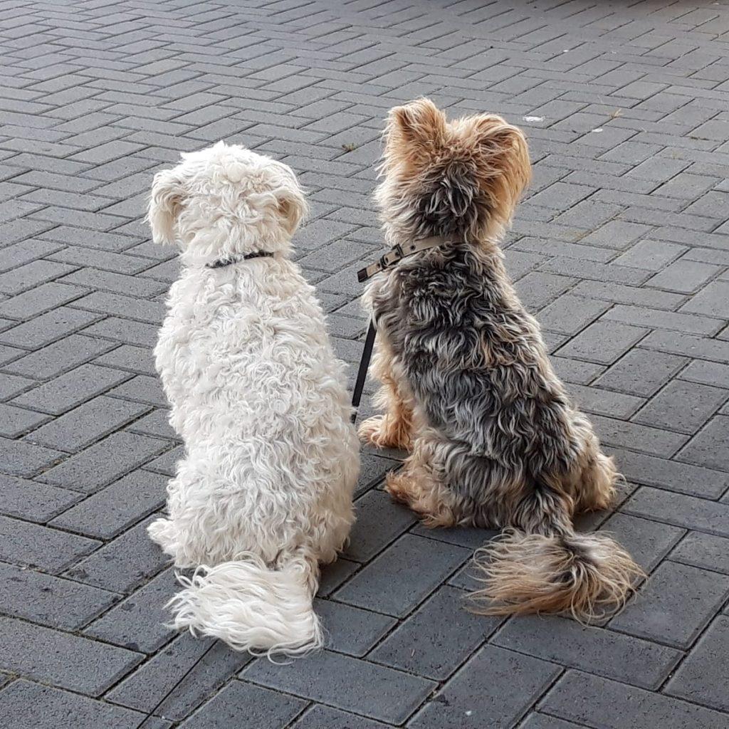 Hunde Foto: Heike und Lorenz und Vicki - Best  Friends