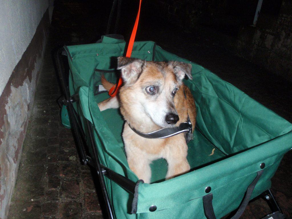 Hunde Foto: Astrid und Rue - besser gut gefahren, als schlecht gelaufen