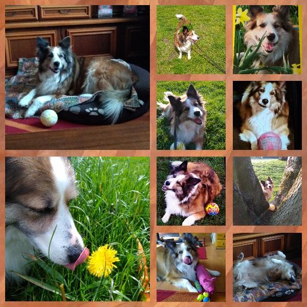 Hunde Foto: Martina und Sandy - Sandy unser Sonnenschein!