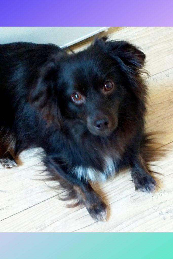 Hunde Foto: Doris und Pico - Mein Sonnenschein ☀