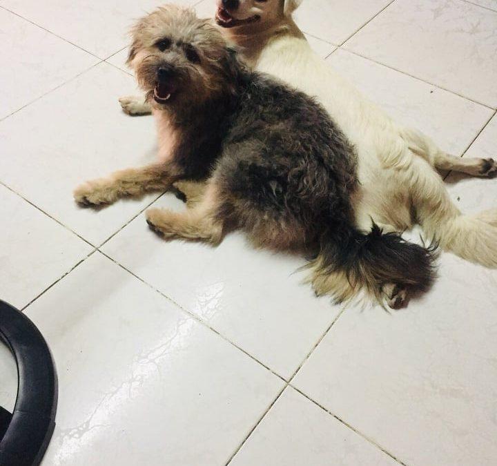Hunde Foto: My und BiBi und Bol – Meine Engel