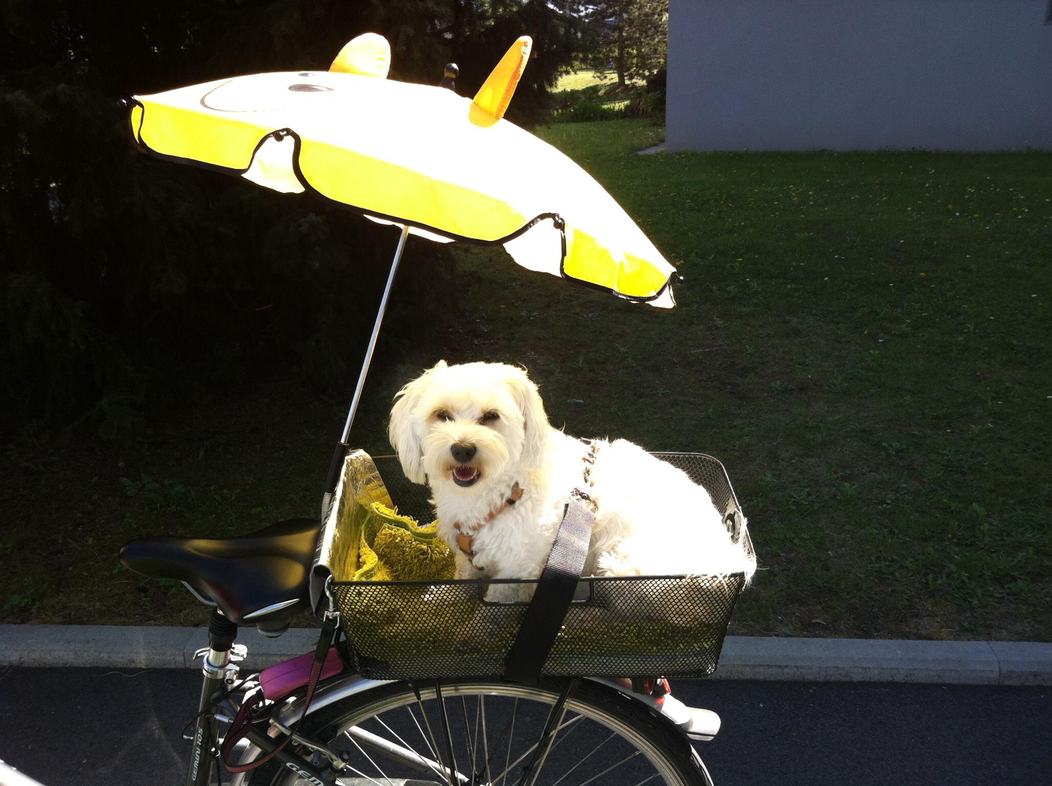 Hunde Foto: Claudia und Elli 🥰 🐾 – Fährt sehr gerne mit dem Fahrrad! 😅