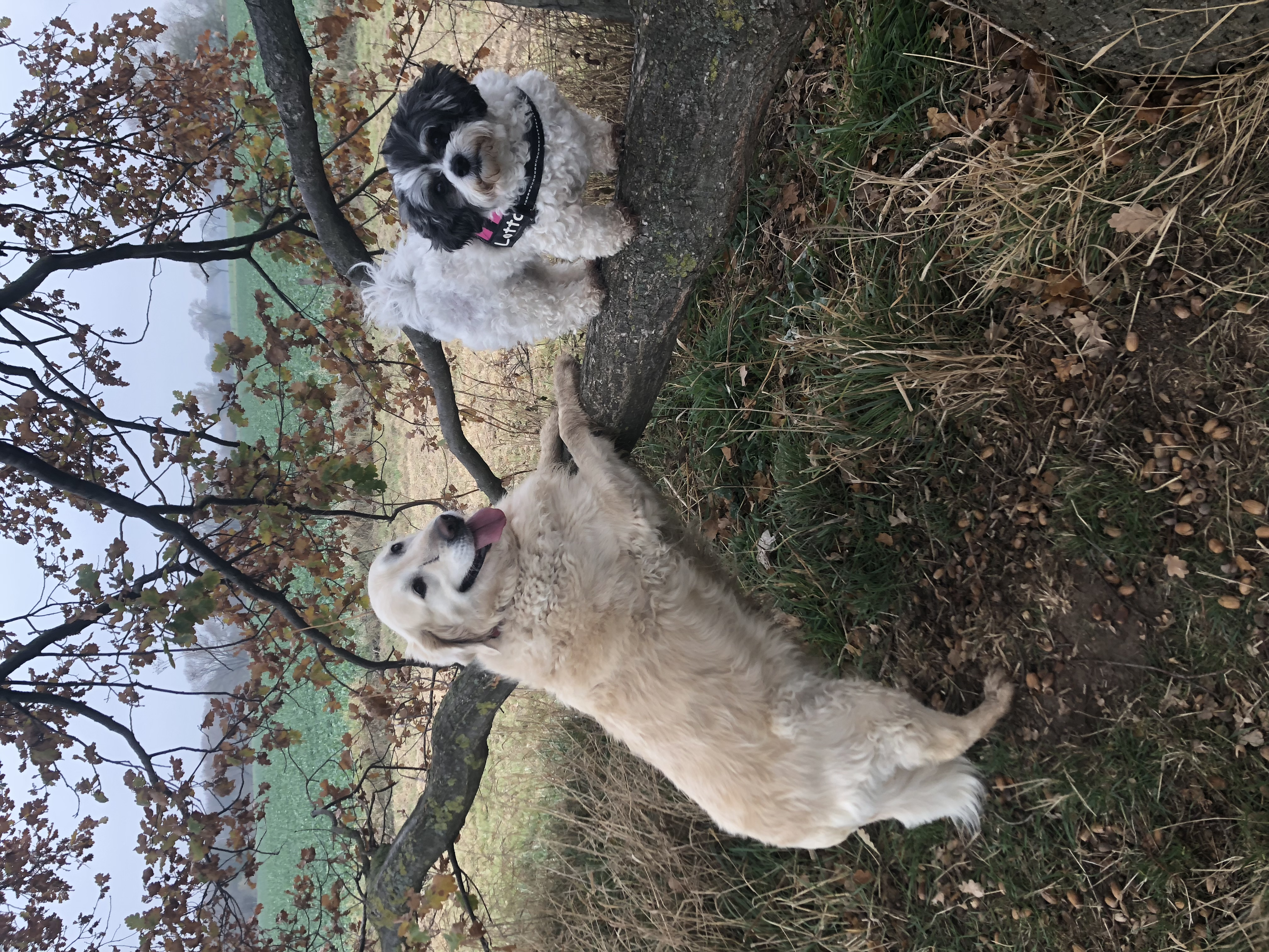 Hunde Foto: Ramona und Emily & Lotta – Emmchen & Lottchen