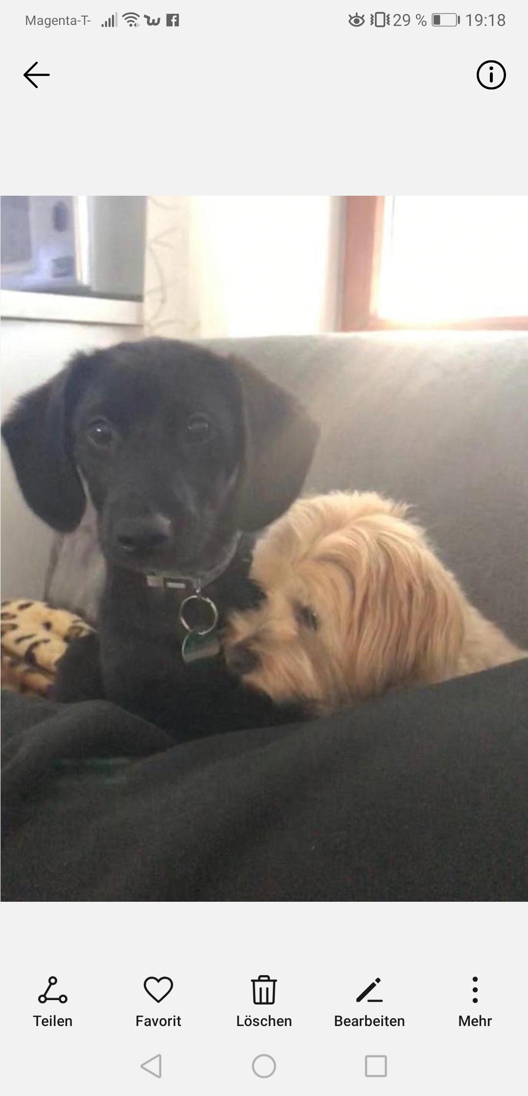 Hunde Foto: Christine und Rocky und Mia – Rocky u Mia