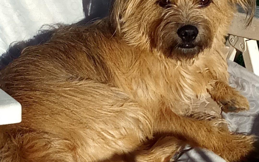 Hunde Foto: Ulla und Daisy – Hündin