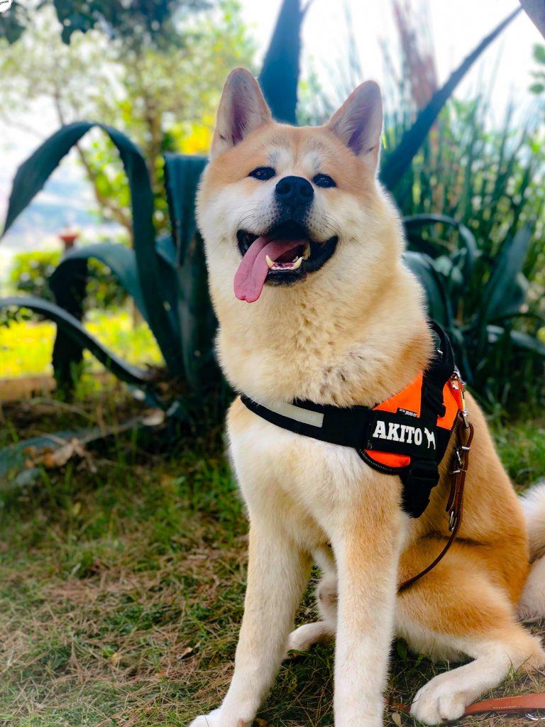 Akito genießt wie man sieht seinen ersten Urlaub in Italien 🇮🇹