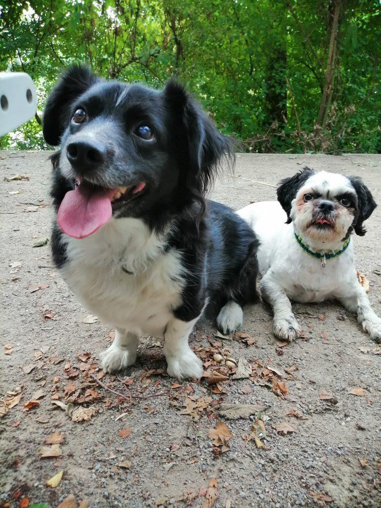 Lenny und Lucy, zwei Rumänen im Ruhrpott