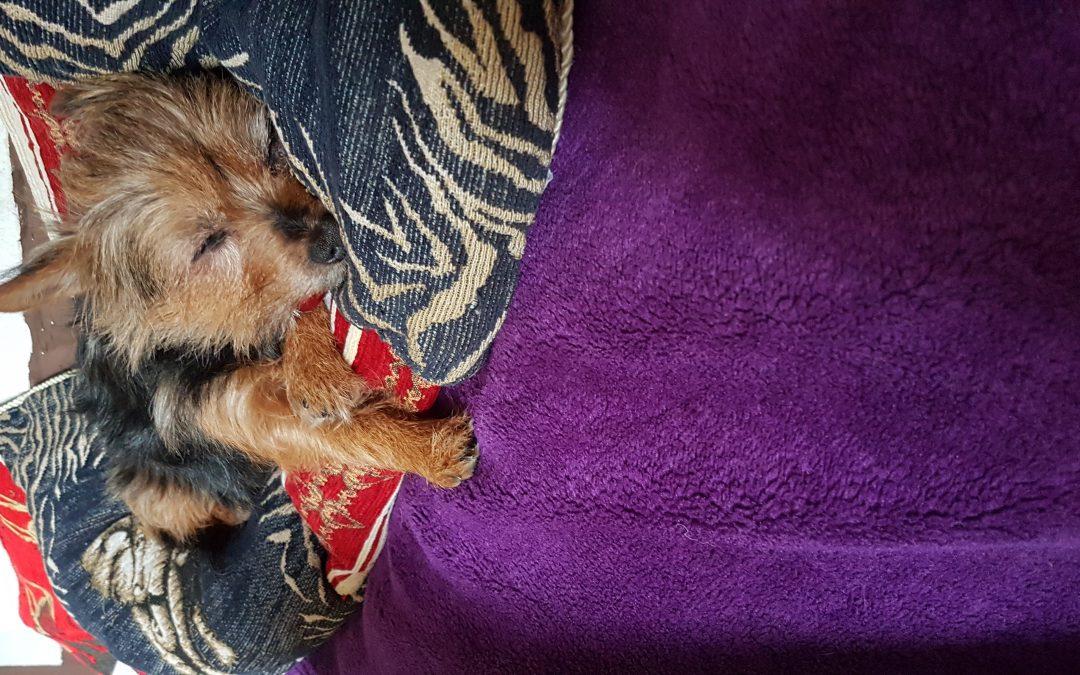 Hunde Foto: Susanne und Bella – Ich bin müde