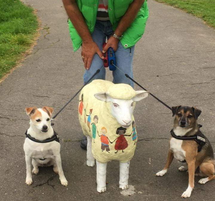 Hunde Foto: Marion und Angie und Scrazy – Nicht ein Schaf sondern drei Schafe 🤣