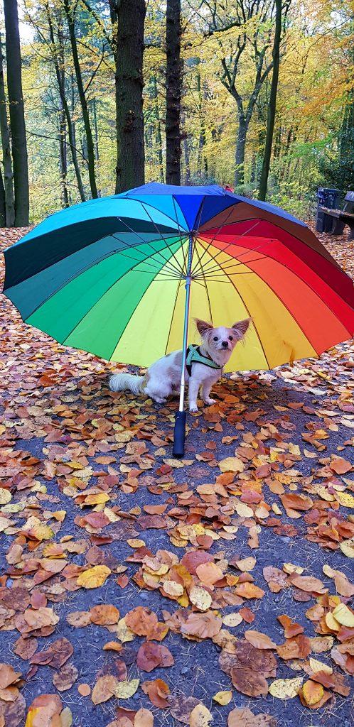 Herbst mit Hund