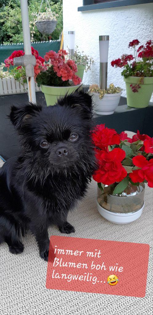 Immer macht Frauchen  Bilder von mir mit Blumen 😂