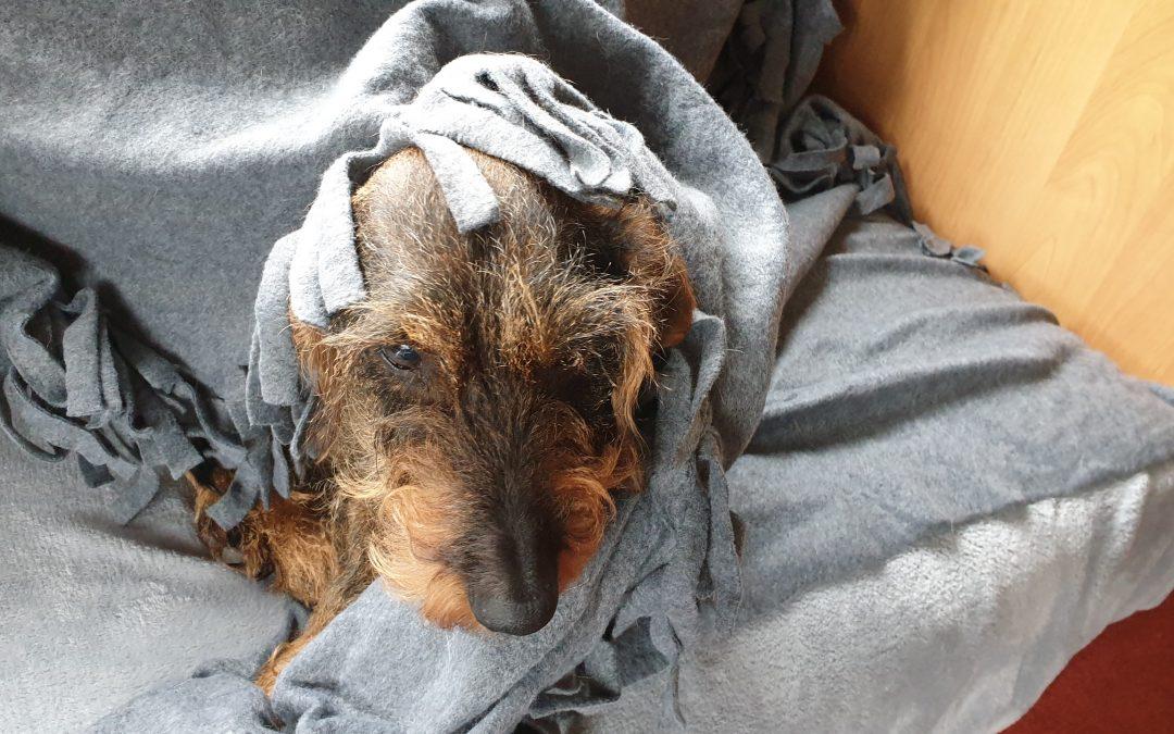 Hunde Foto: Barbara und Lumpi – Nee, was ist das heute usselig