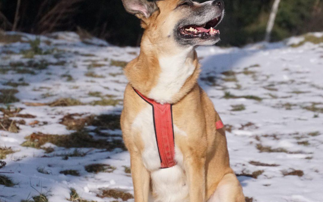 Hunde Foto: Mario und Lisa – Ich bin ein Model XD