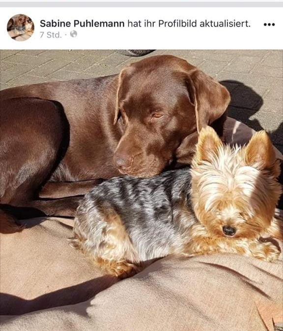 Hunde Foto: Sabine und Sina und Krümel – Unzertrennlich