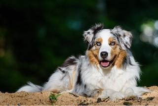 Hunde Foto: Sandra und Joe – Mein Traumhund