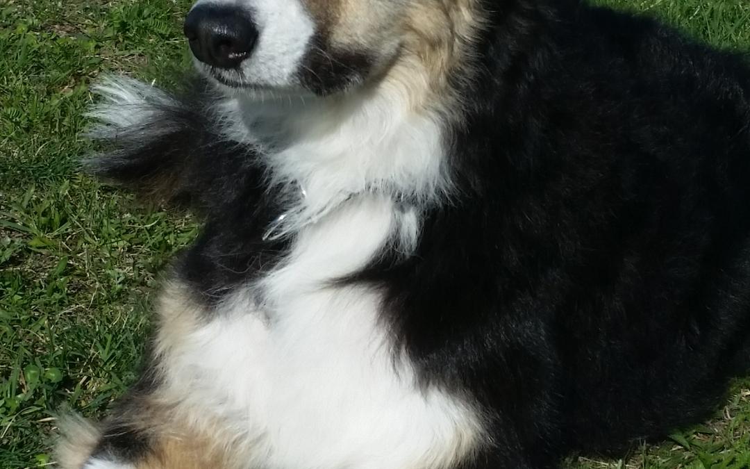 Hunde Foto: Marietta und Melody – Mein ein und alles!