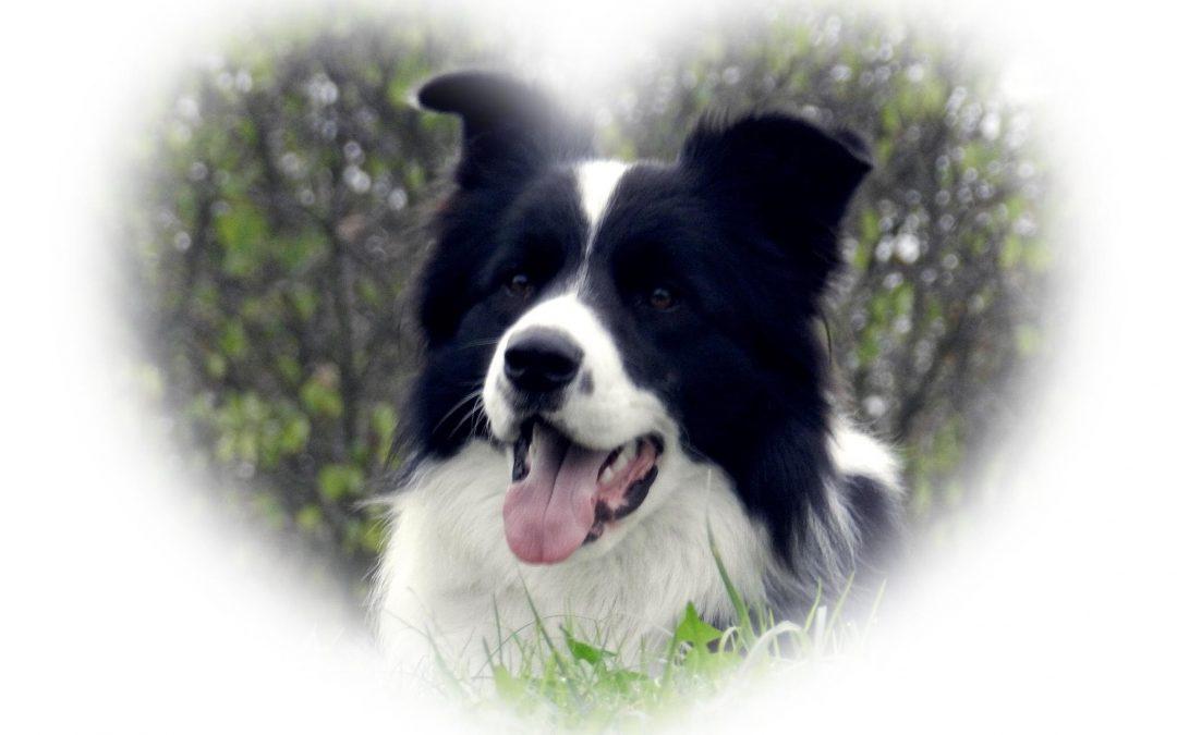 Hunde Foto: Josef und Cooper – Kumpel