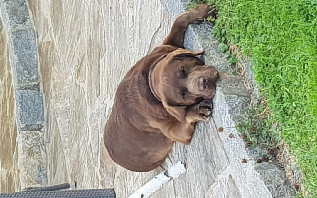Hunde Foto: Andreas und Diego – Chill mal