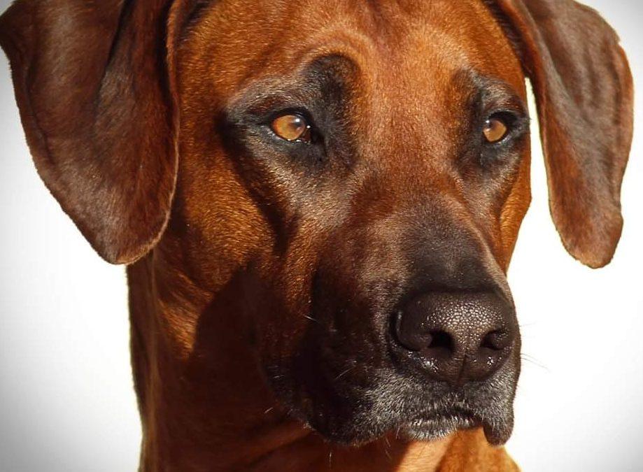 Hunde Foto: Jennifer und Jamali – 500.000 Bilder und dann diese eine für mich ganz Besondere 😍❤