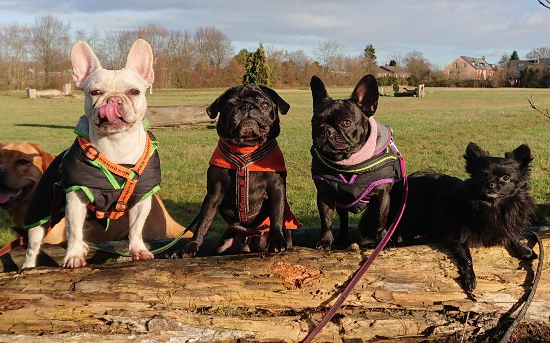 Hunde Foto: Swenja und Marlene, Matze, Amba Caramba, Fips – Bull-Mo-Gang on Tour