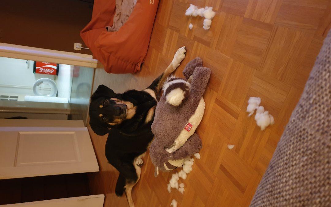Hunde Foto: Matthias und Dean – Er hat angefangen 🤣
