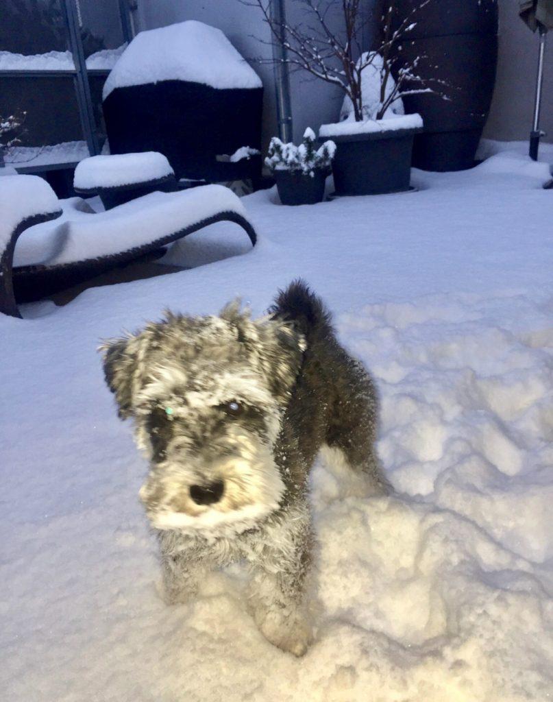 Meine Schnee-Königin