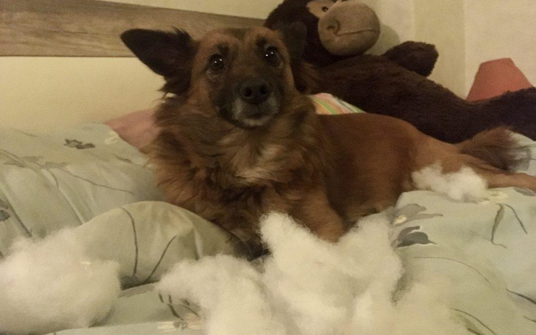 Hunde Foto: Ralf und Luna – Explodiert